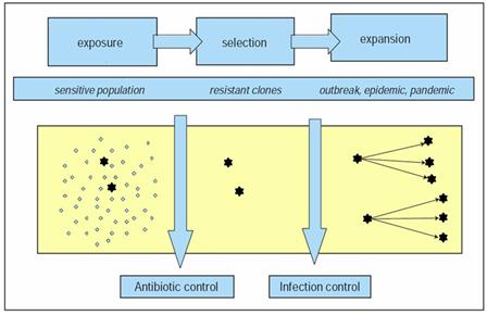 Model of resistance emergence